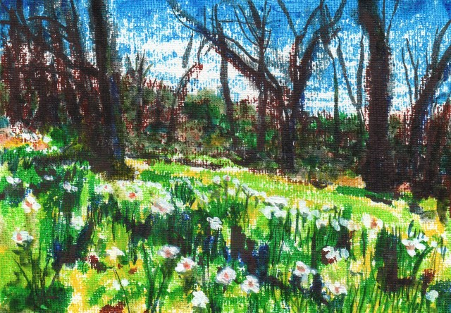 Daffodils in the Woods
