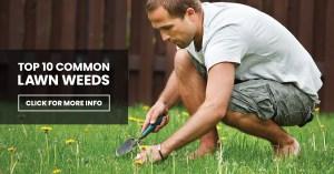 Top 10 Common Lawn Weeds