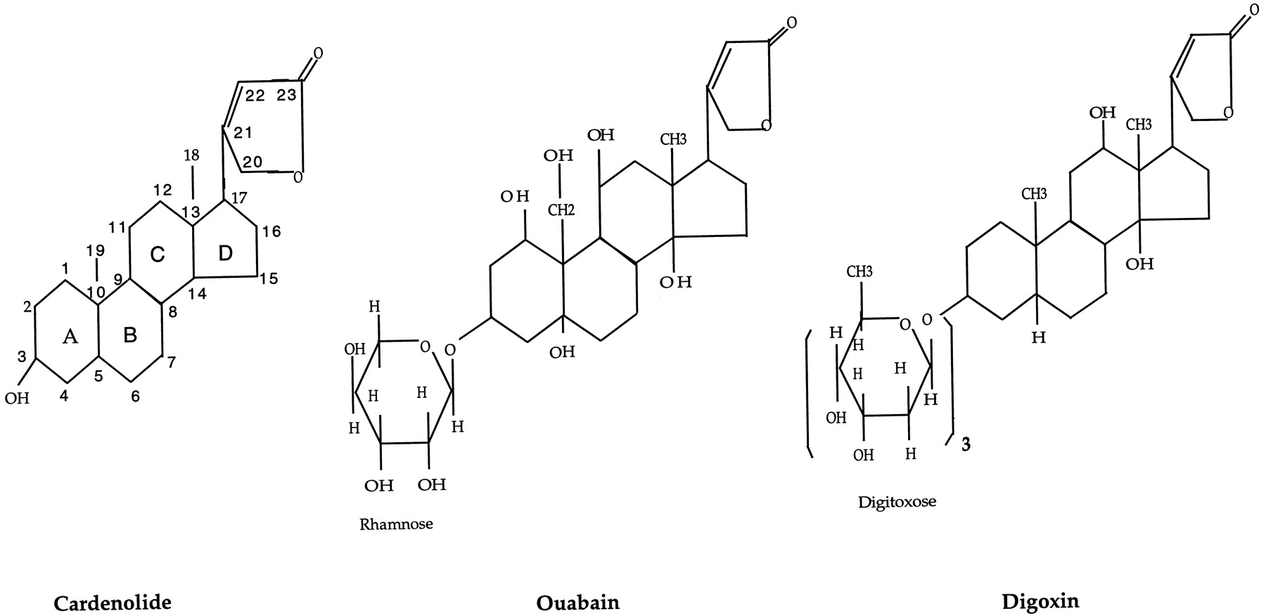 Monoclonal Antibo S That Distinguish Between Two Related Digitalis Glycosides Ouabain And