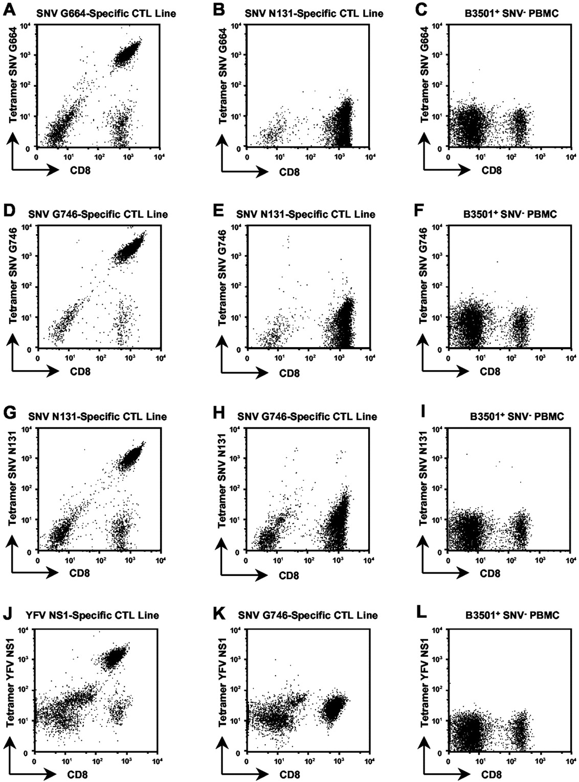 Role of Specific CD8+ T Cells in the Severity of a Fulminant ...