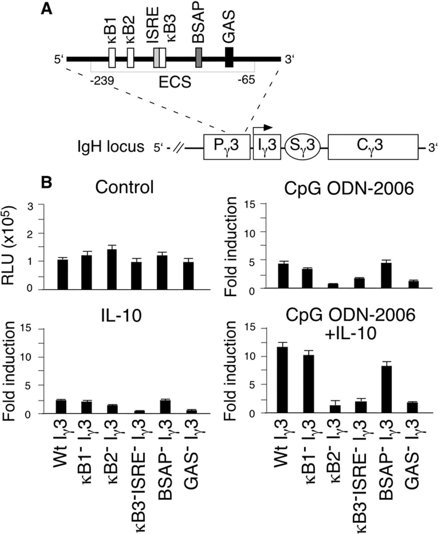Cpg Dna Induces Igg Class Switch Dna Recombination By