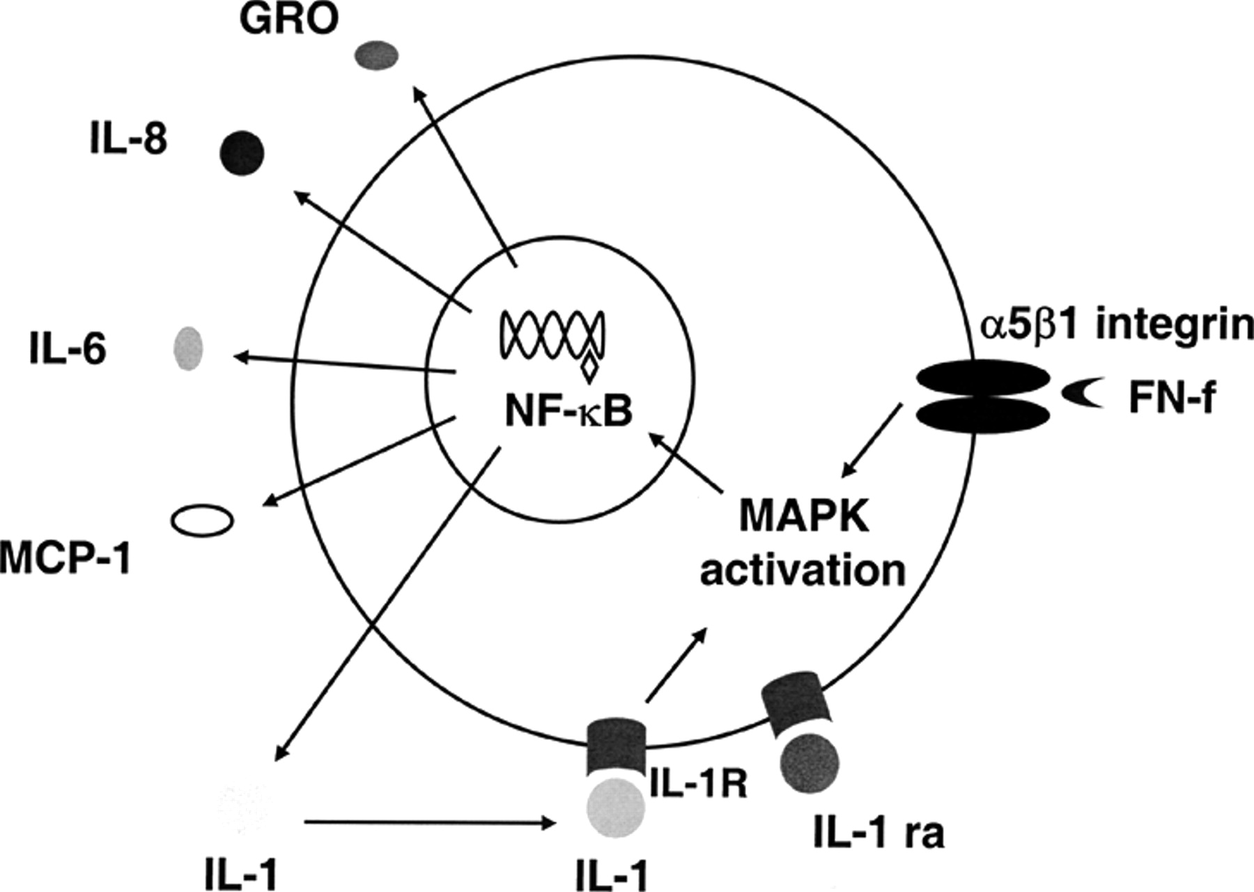 Nf B Mediates The Stimulation Of Cytokine And Chemokine