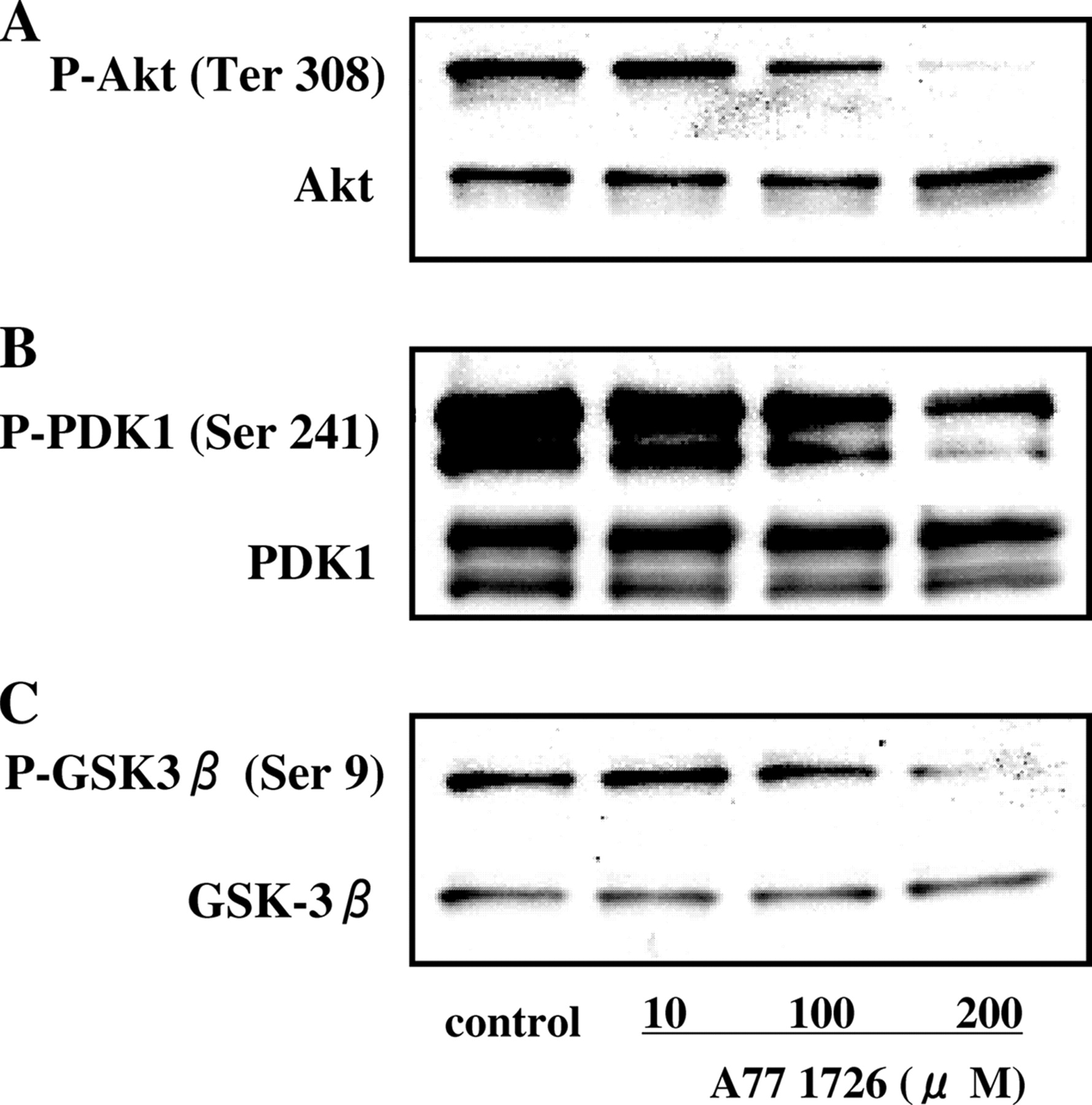 Leflunomide Inhibits PDK1/Akt Pathway and Induces