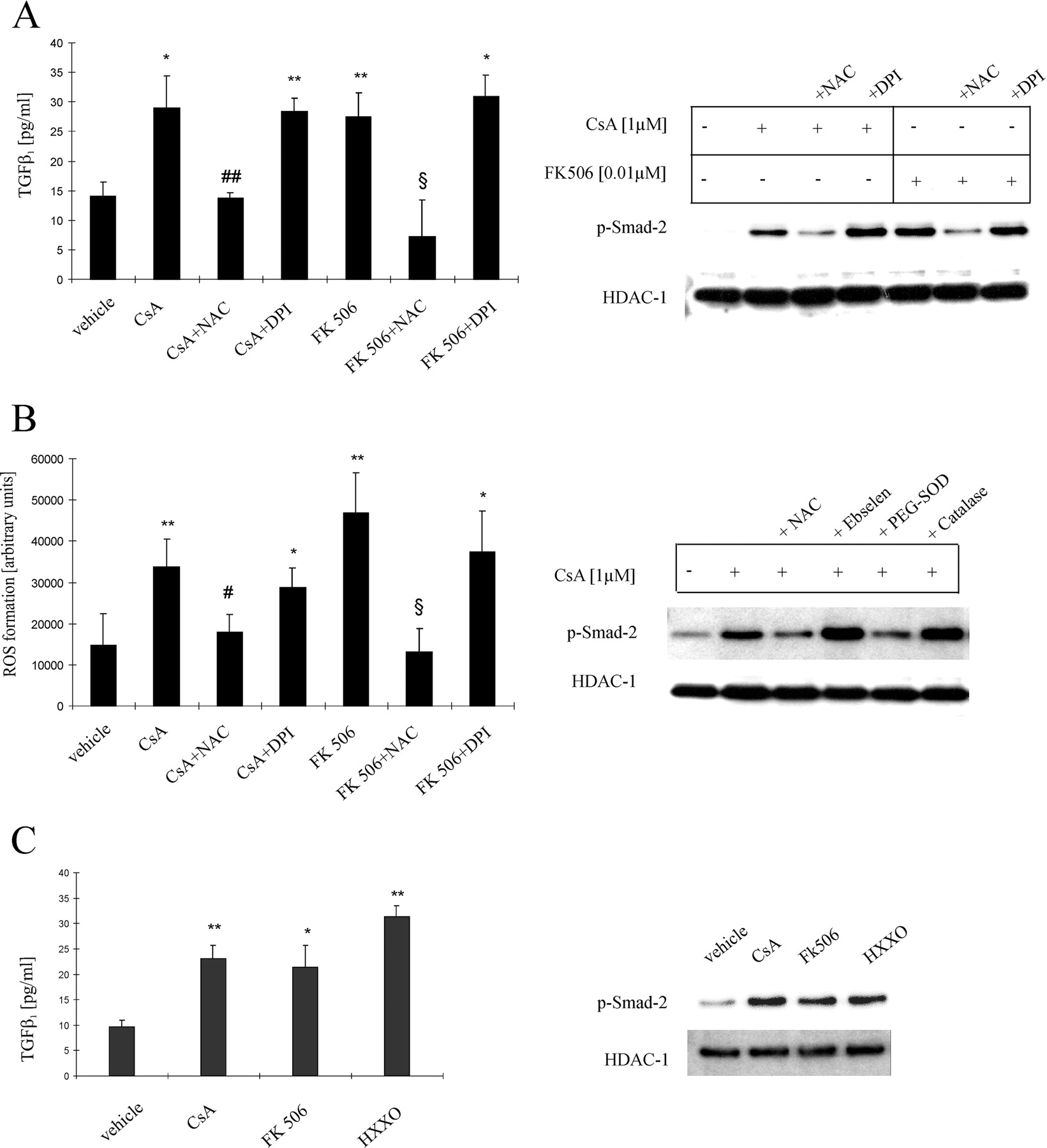 Molecular Mechanisms Of Tgf Receptor Triggered Signaling Cascades Rapidly Induced By The