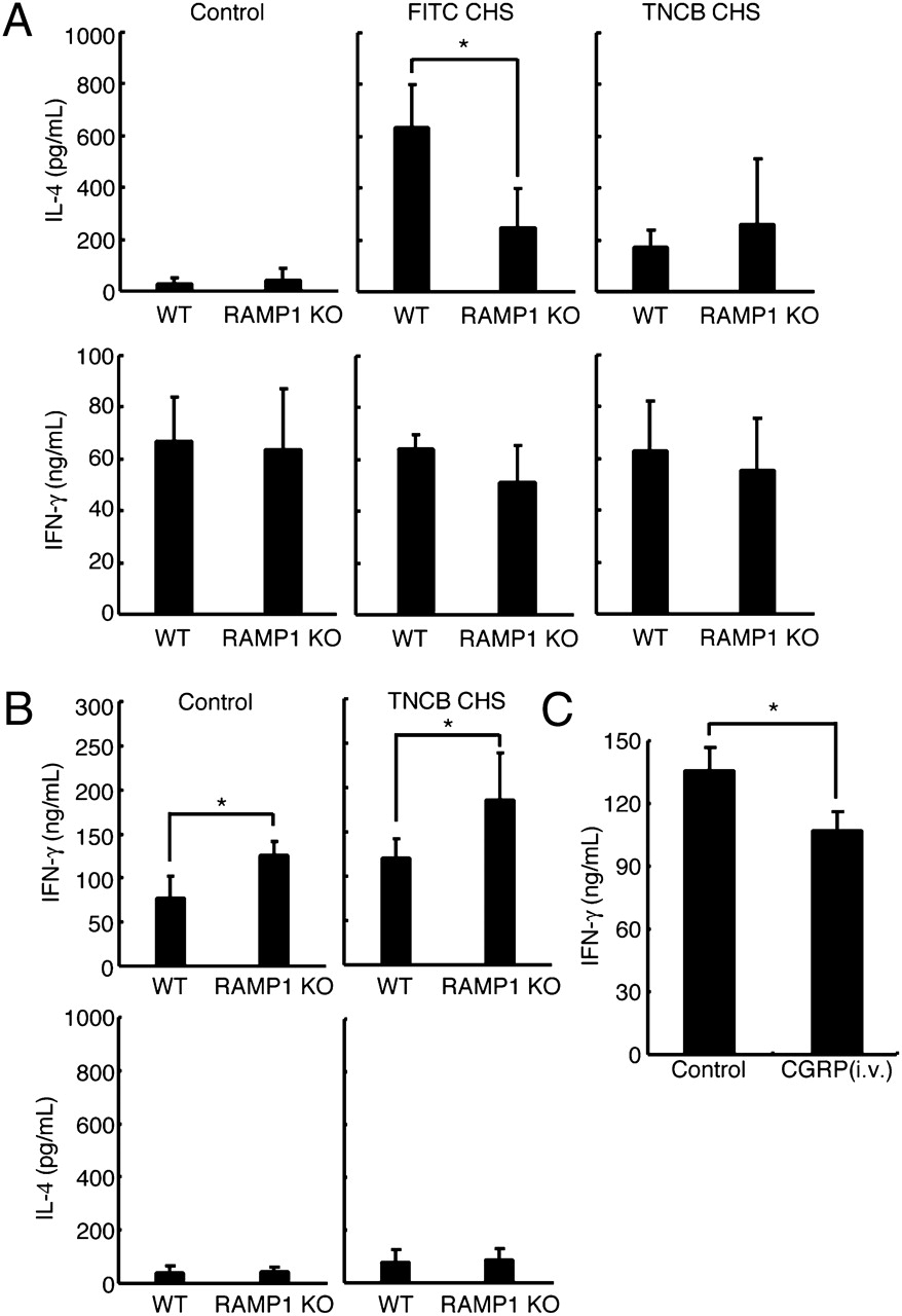 Calcitonin Gene-Related Peptide Is an Important Regulator