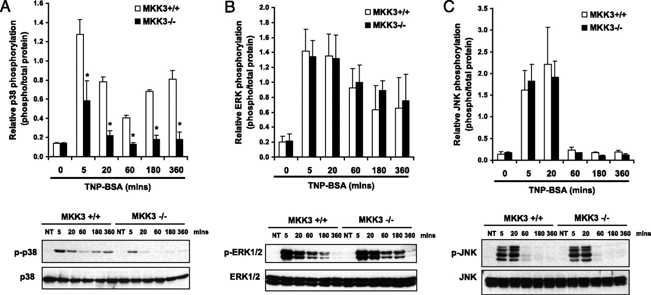 MAPK Kinase 3 Specifically Regulates FcεRI-Mediated IL-4