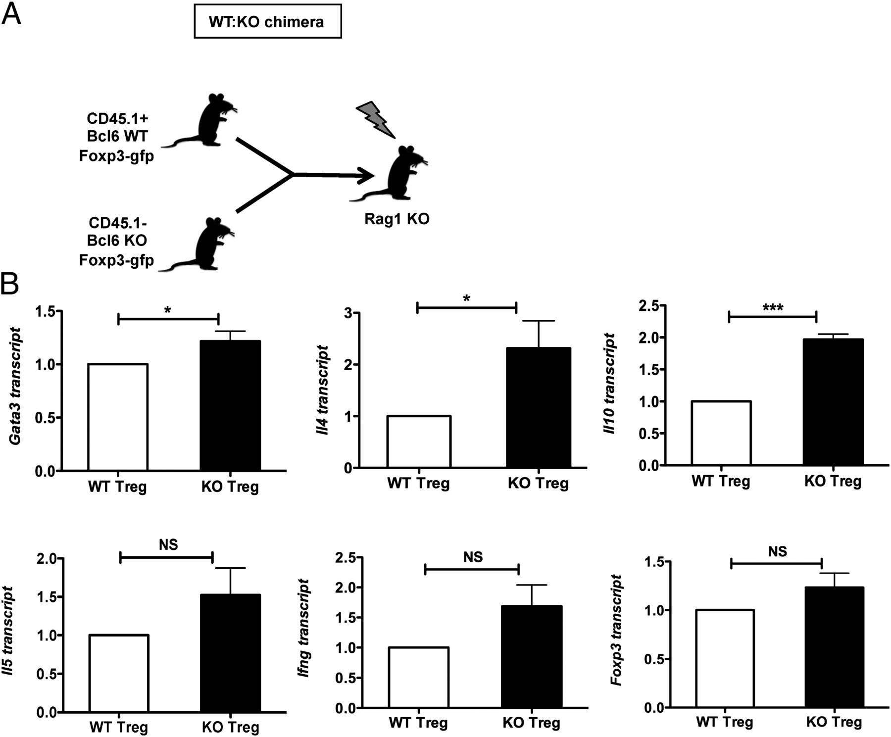 Bcl6 Controls the Th2 Inflammatory Activity of Regulatory