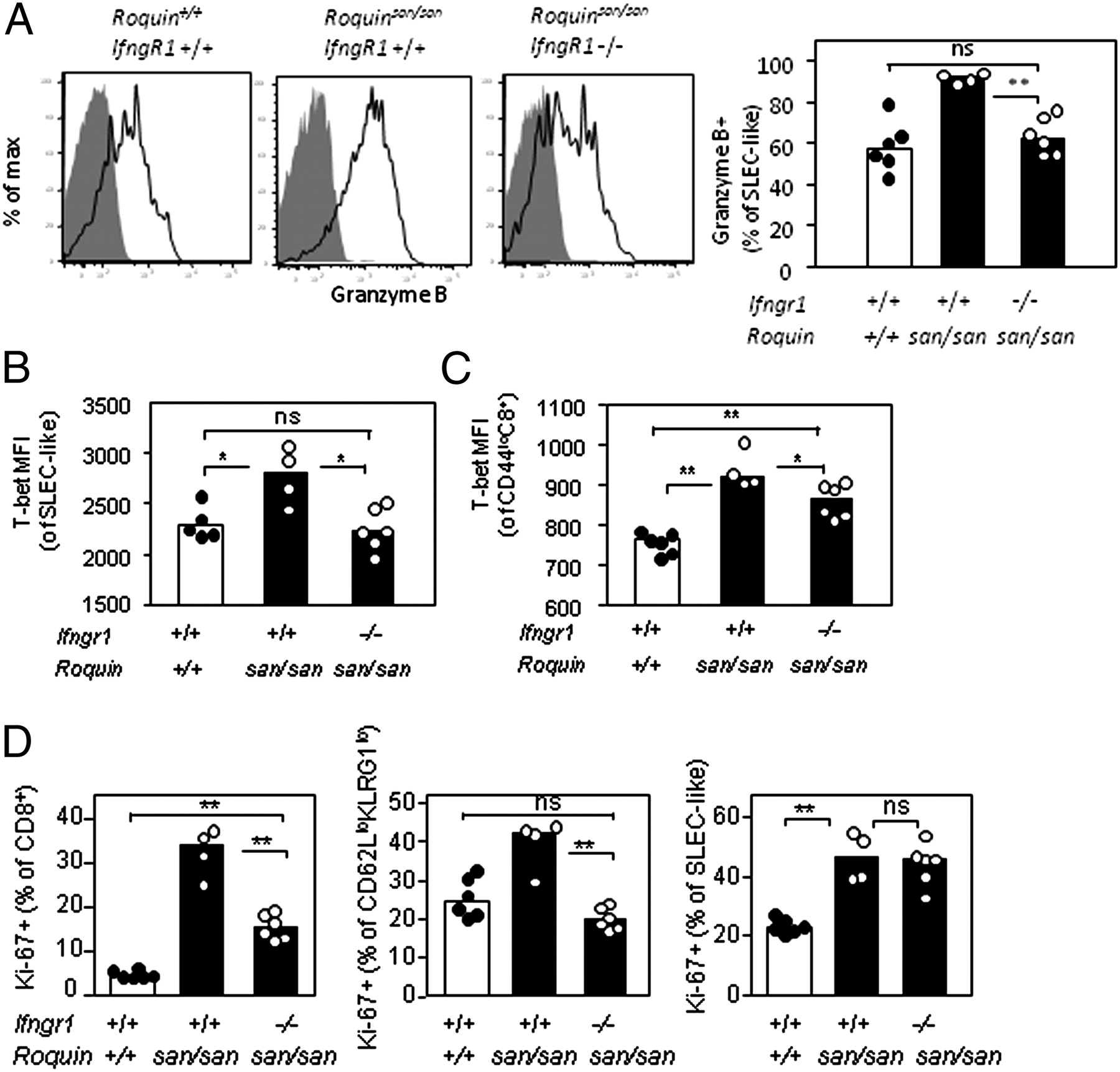 Breakdown in Repression of IFN-γ mRNA Leads to