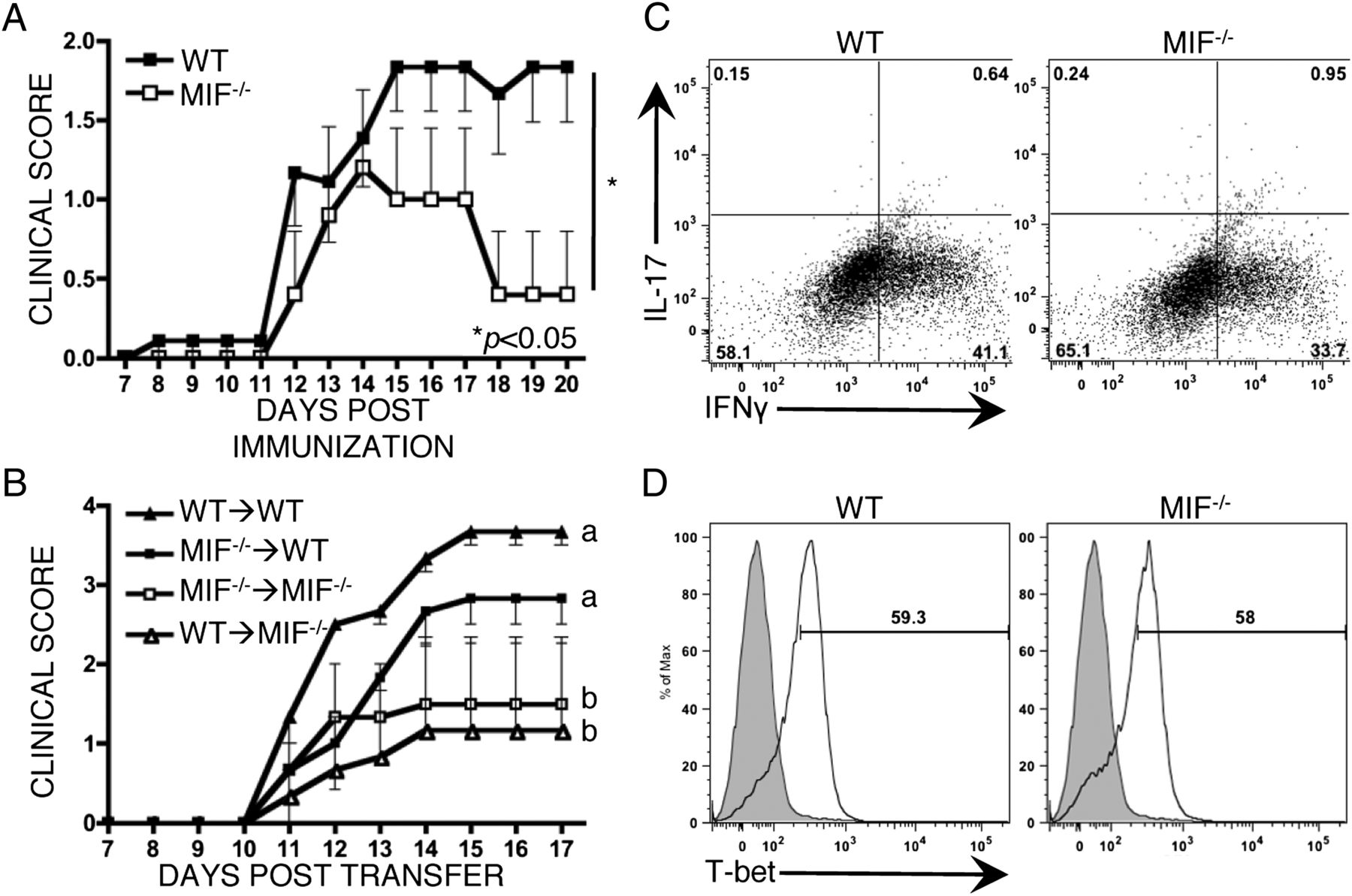 Macrophage Migration Inhibitory Factor Potentiates