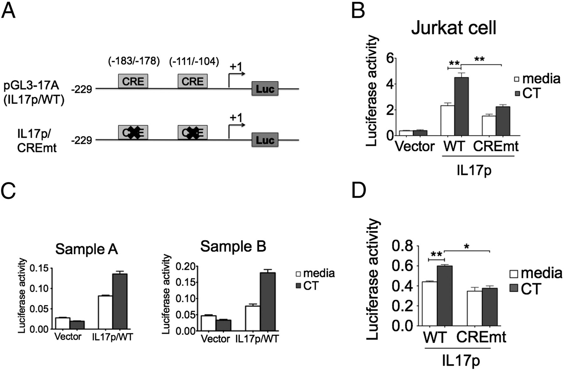 Cholera Toxin Directly Enhances Il 17a Production From