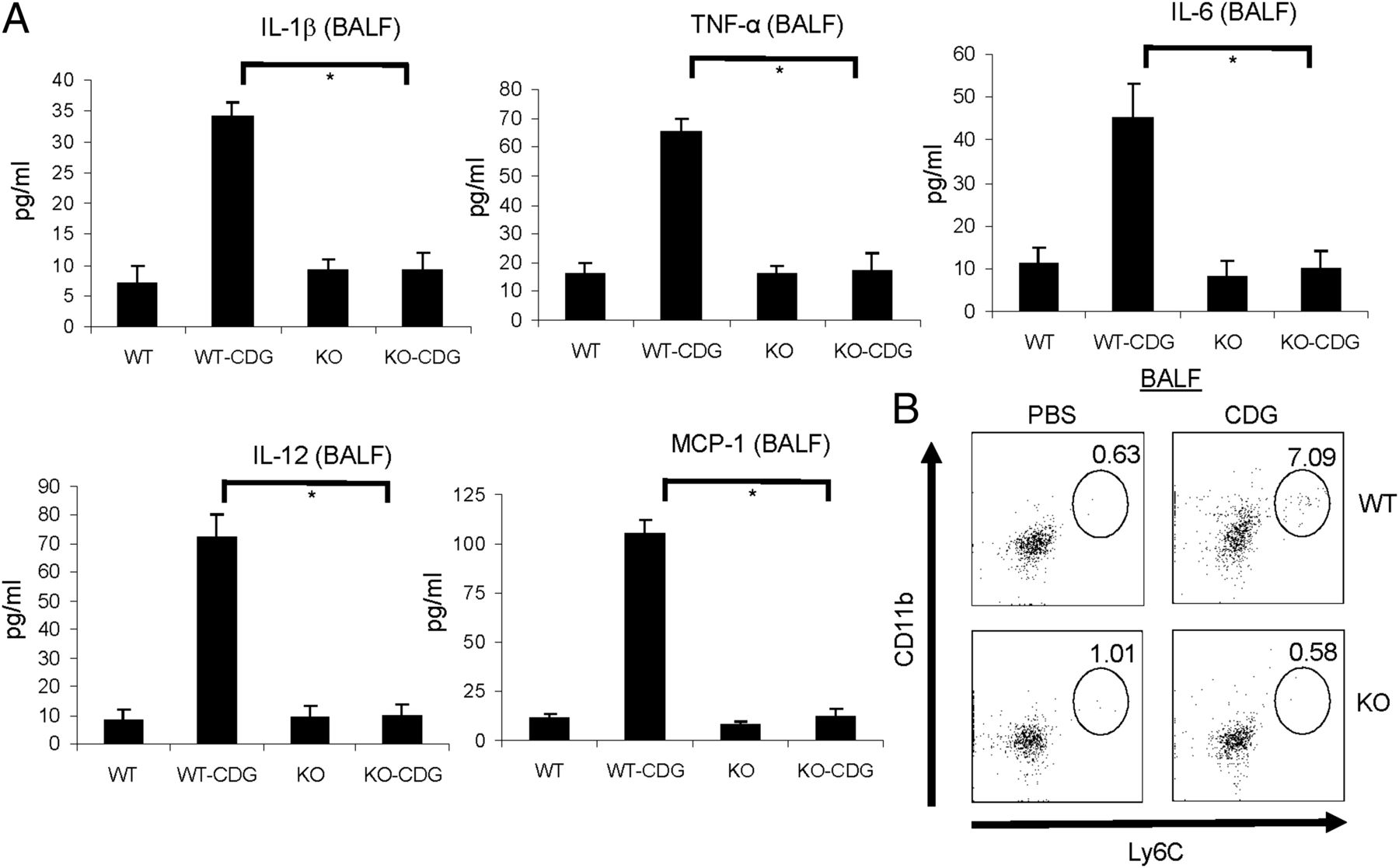 MPYS/STING-Mediated TNF-α, Not Type I IFN, Is Essential