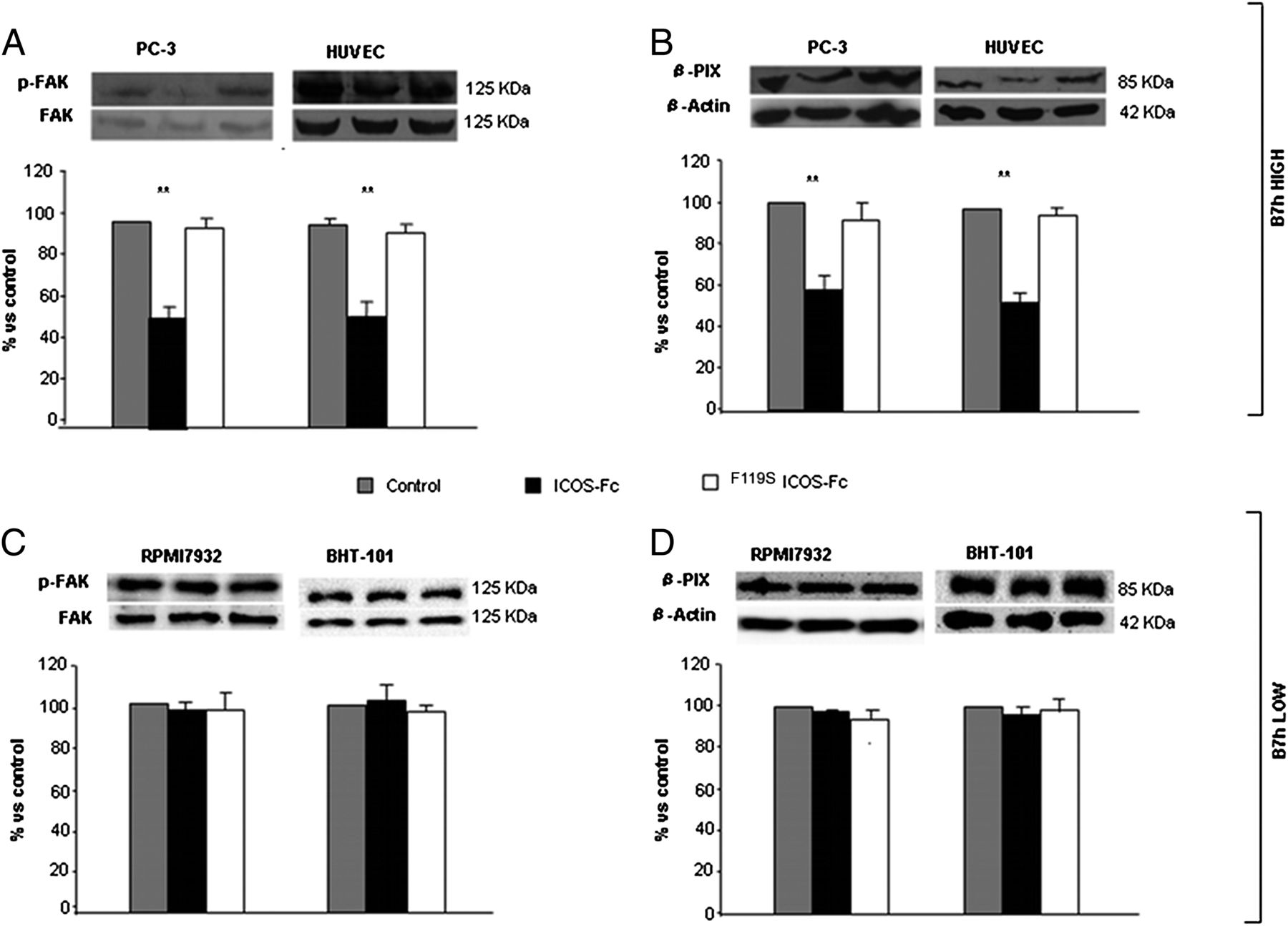 B7h Triggering Inhibits the Migration of Tumor Cell Lines