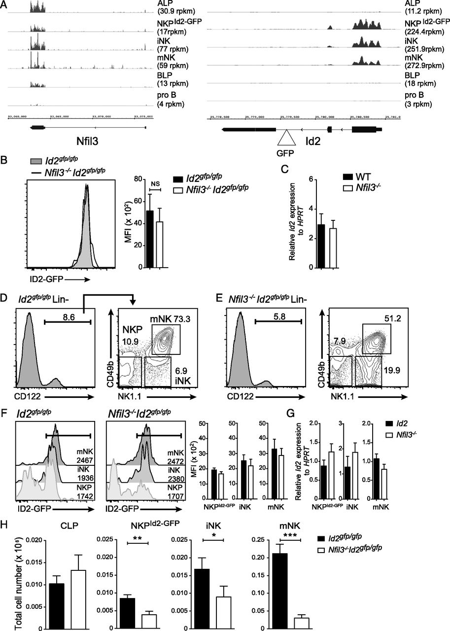 Differential Requirement for Nfil3 during NK Cell