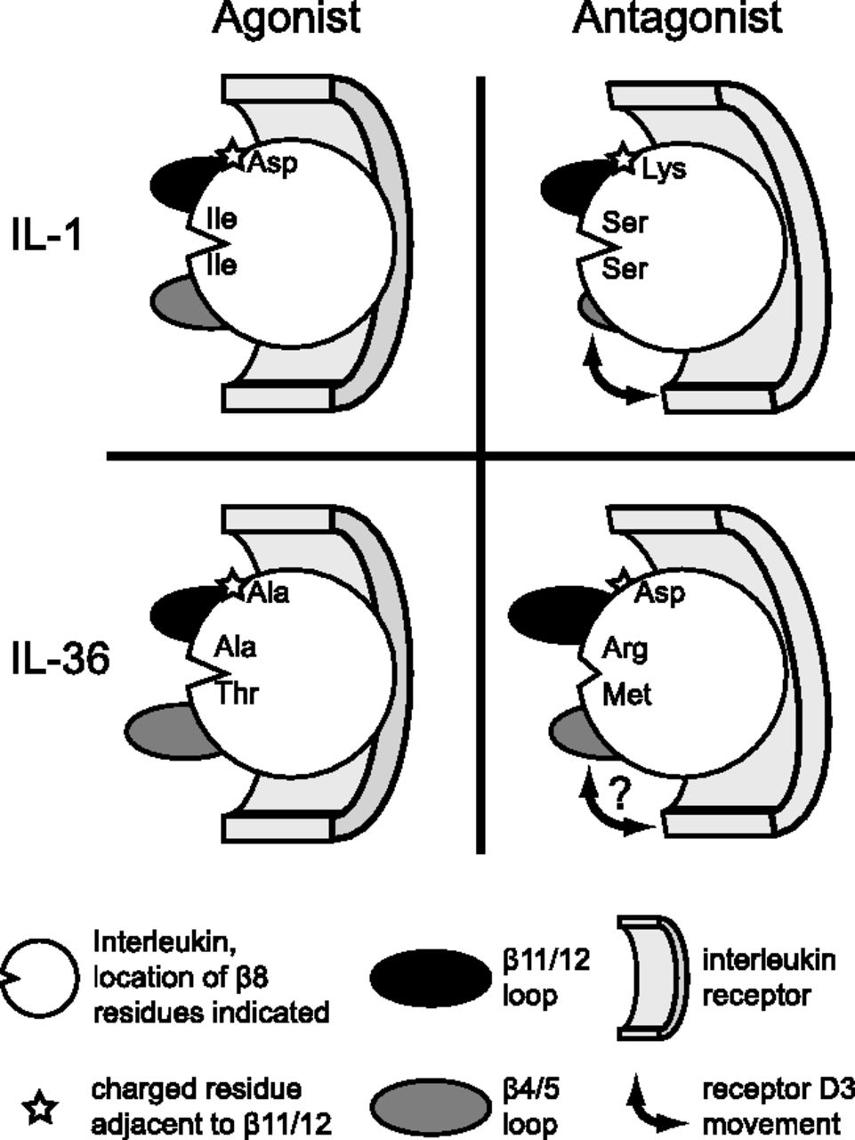 Molecular Determinants of Agonist and Antagonist Signaling