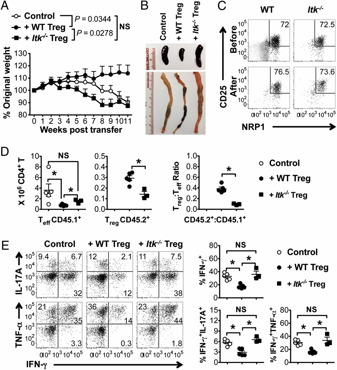 IL-2–Inducible T Cell Kinase Tunes T Regulatory Cell