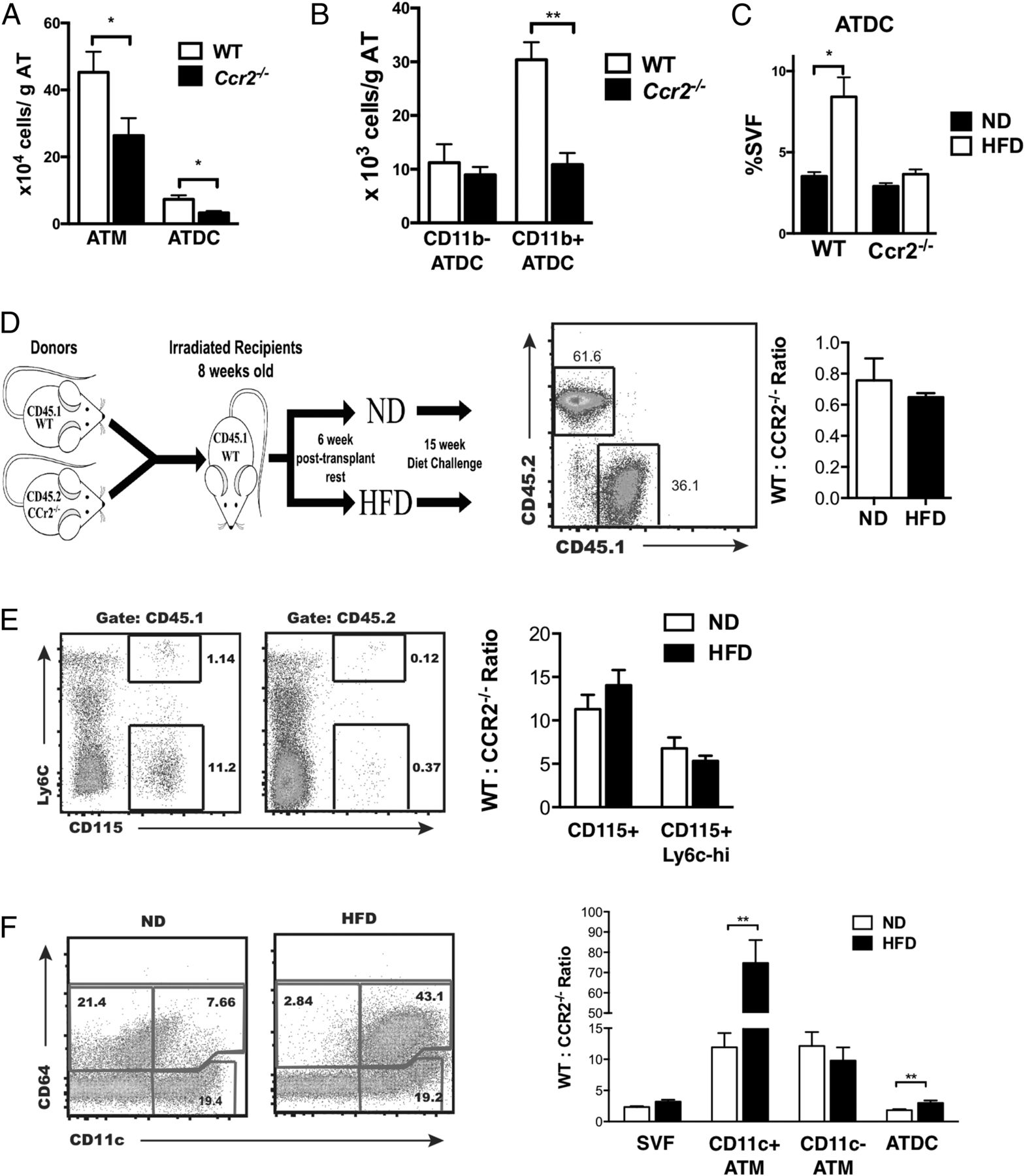 Adipose Tissue Dendritic Cells Are Independent