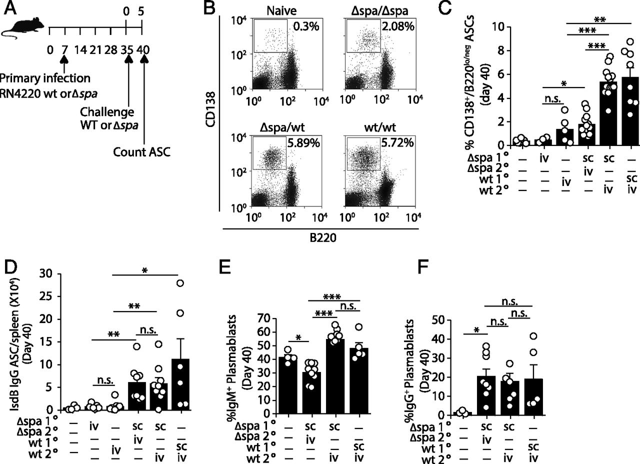 Staphylococcus Aureus Protein A Disrupts Immunity Mediated