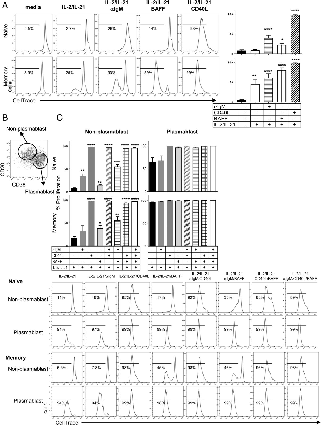 Aiolos Overexpression in Systemic Lupus Erythematosus B