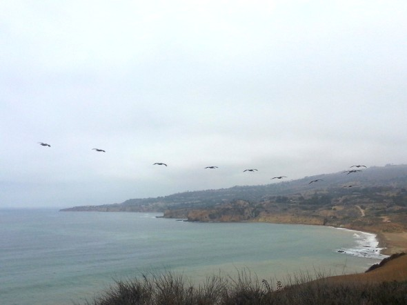Pelicans and June Gloom