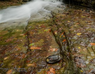 nature photography Nature Photogrpahy – Autumn in Bella Vista Arkansas Autumn at Tanyard Creek 17
