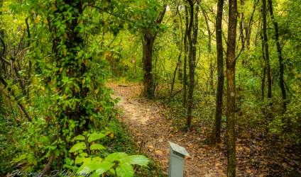 nature photography Nature Photogrpahy – Autumn in Bella Vista Arkansas Autumn at Tanyard Creek 38