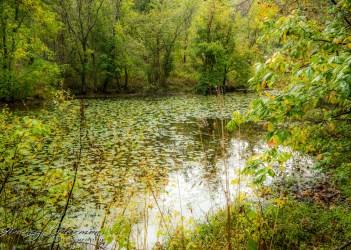 nature photography Nature Photogrpahy – Autumn in Bella Vista Arkansas Autumn at Tanyard Creek 5