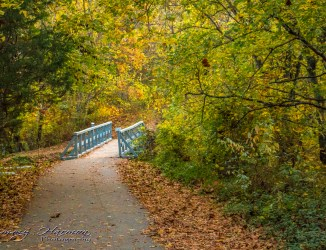 IMG_6459 Nature Photography Nature Photography – Autumn in Bella Vista IMG 6459