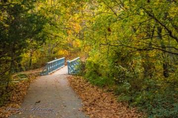 Nature Photography Nature Photography Nature Photography – Autumn in Bella Vista IMG 6459 1024x683