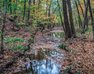nature photography Nature Photography – Dogwood Canyon Dogwood Canyon 24