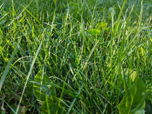 Green Grass in Sun