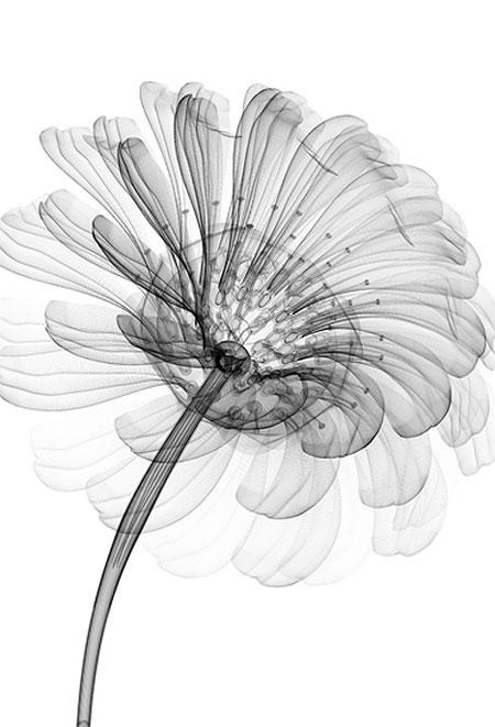 murayama-flora-03