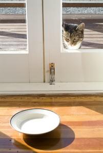 cat-doors-201x300 Cat Doors