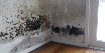 Black Mould in Apartment