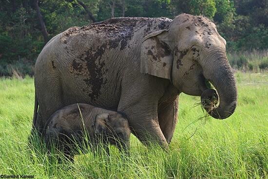 Wildlife Resort In Corbett Luxury Jungle Resort In Jim