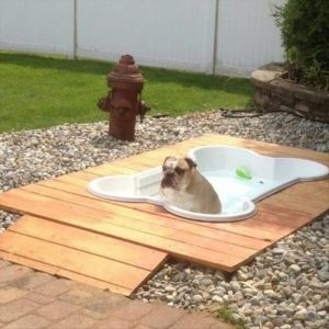 Pet Friendly Garden Design Ideas Jim's Mowing And Gardening