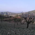 Kvetoucí mandloně v horách regionu Almería na jihu Španělska