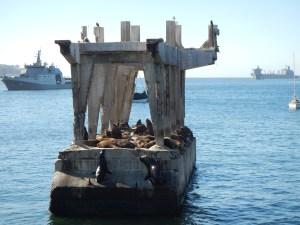 Polorozpadlé molo s kolonií lachtanů v Chile ve městě Valparaíso