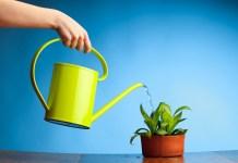 Ruka s konvičkou zalévá květináč s rostlinou.
