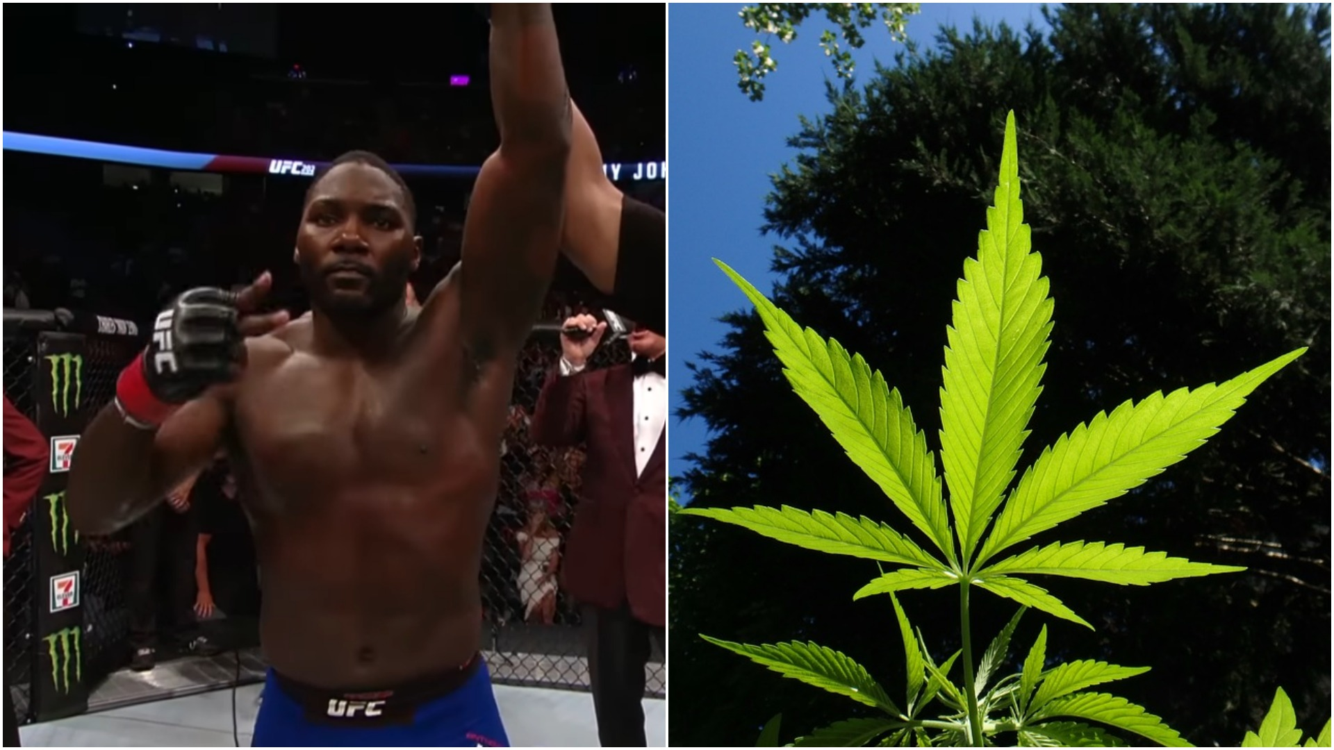 Ian McCall Has Advice For Anthony Johnson's Medical Marijuana Facility