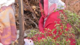 woman with tulasi plant