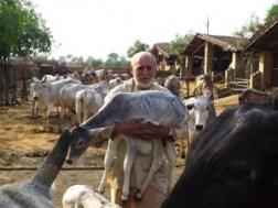 Kurma Rupa with calf
