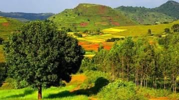 Araku valley best hill station in Andhra Pradesh