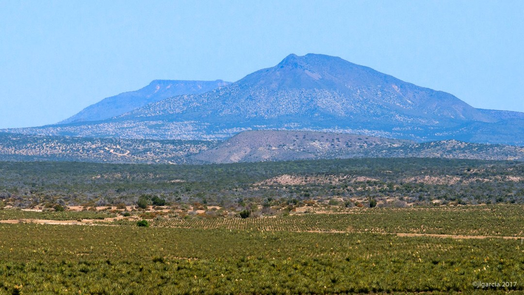 Panorama de la plantación