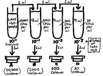 Dilution Plating