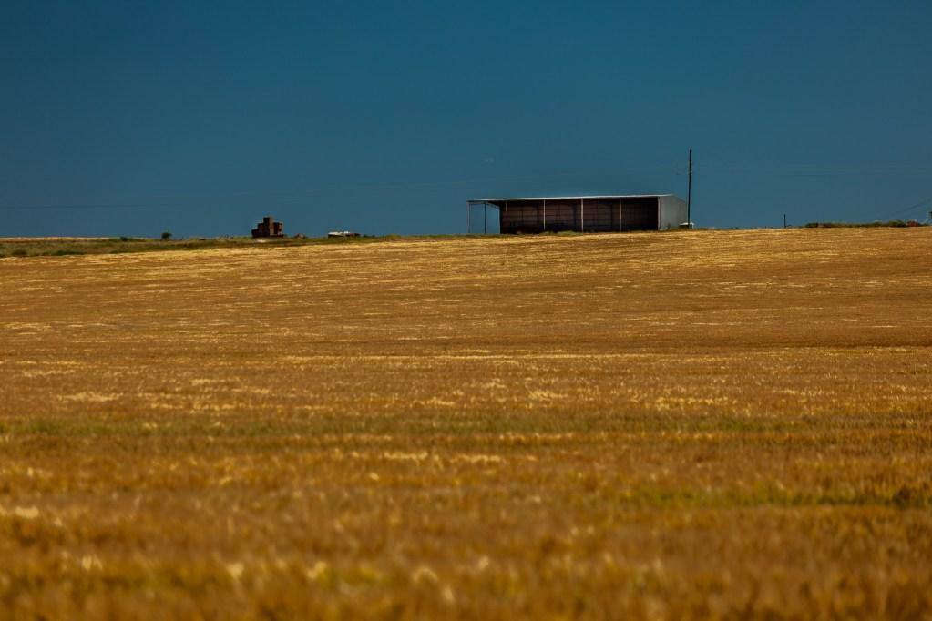 wheatfield_17102018-7482-1.jpg