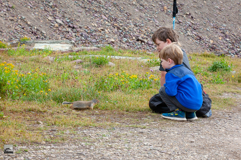 Kids meeting a ground squirrel