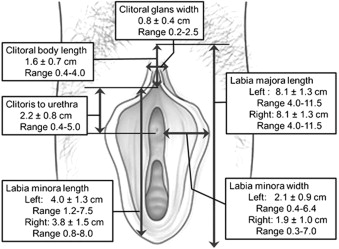 Do Measurements of External Genitalia Correlate with Body