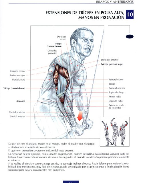 Tríceps: Jalones en polea con cuerda