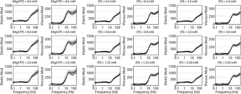 Dynamics of cross-bridge cycling, ATP hydrolysis, force