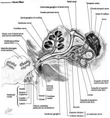Vertigo, tinnitus, and hearing loss in the geriatric